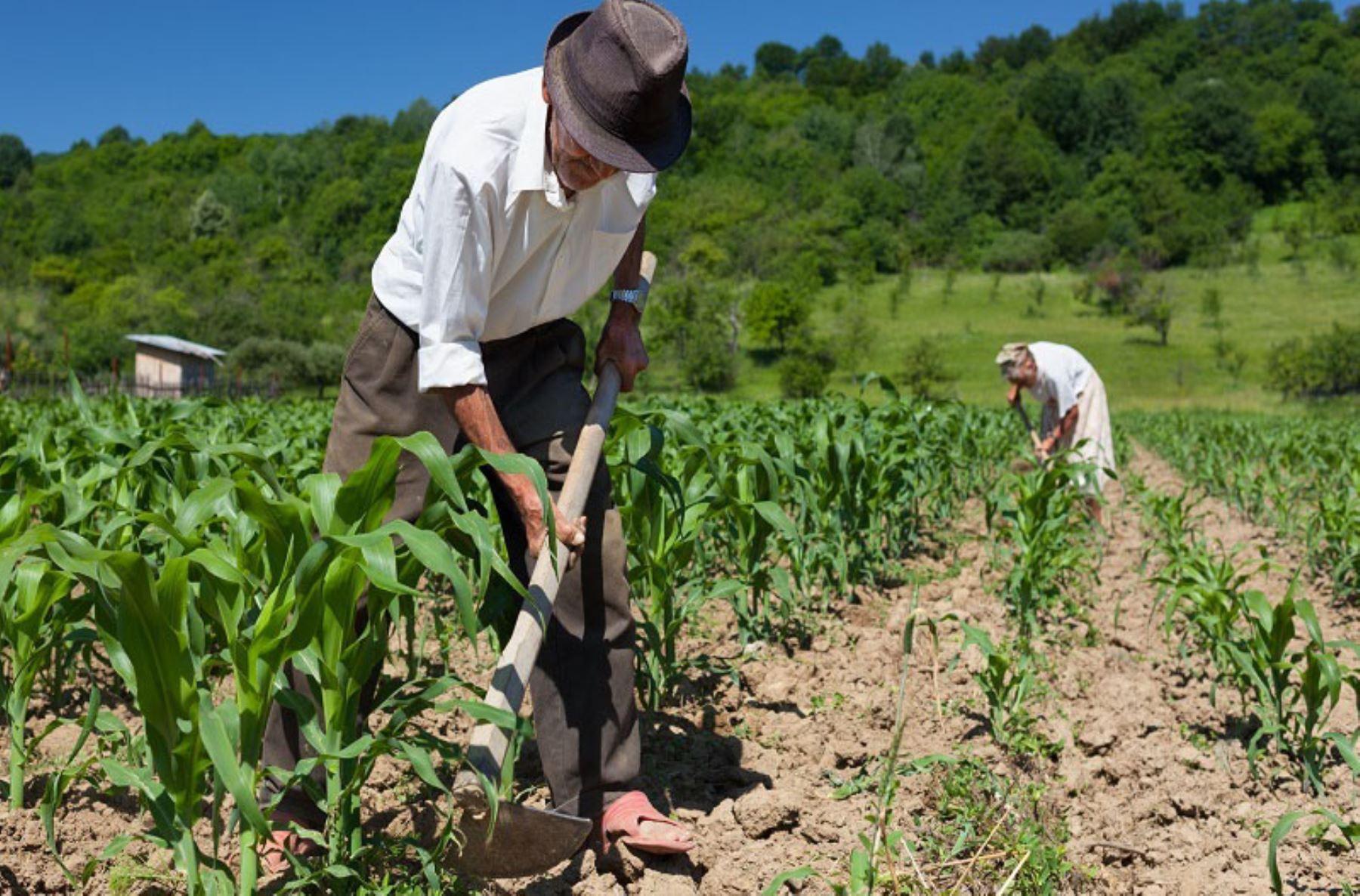 Saiba mais sobre a Aposentadoria por Idade Rural